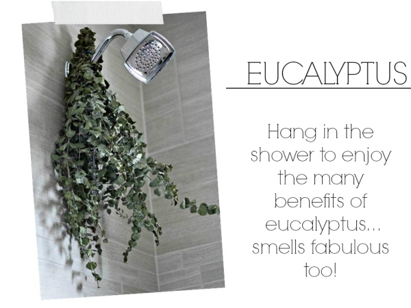 eucalyptus, ways to pamper yourself